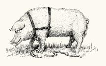 Trüffelschwein