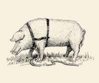 Trüffelschwwein